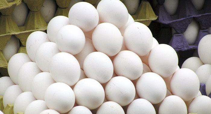 fake eggs