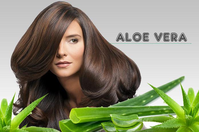 बेजान बालों को चमकदार बनाने के लिए एलो वेरा के प्रयोग