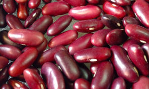 rajma beans