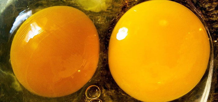 difference between unprinted and fertilized eggs