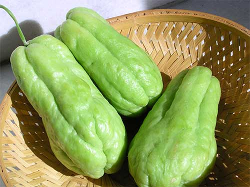 Chayote vegetable