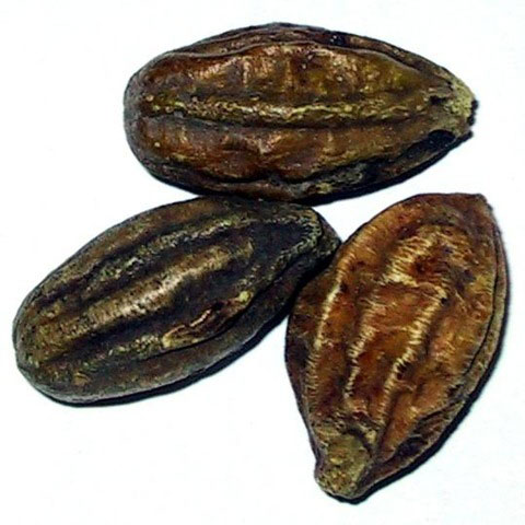Inknut Terminalia chebula/Dry Myrobalan = हरड  IMAGES, GIF, ANIMATED GIF, WALLPAPER, STICKER FOR WHATSAPP & FACEBOOK