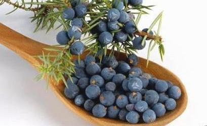 Juniper Berries = हपुषा जामुन  IMAGES, GIF, ANIMATED GIF, WALLPAPER, STICKER FOR WHATSAPP & FACEBOOK