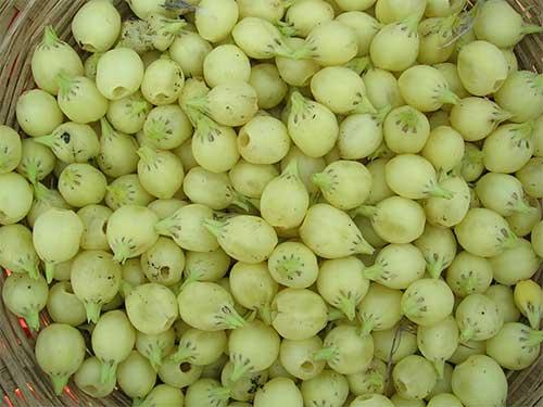 86 सब्जियों के इंग्लिश और हिन्दी