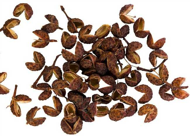 Schezwan Pepper/Teppal/Sichuan Pepper = शेजवान काली मिर्च  IMAGES, GIF, ANIMATED GIF, WALLPAPER, STICKER FOR WHATSAPP & FACEBOOK