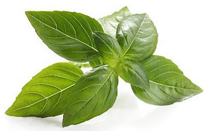 Basil Leaves = तुलसी के पत्ते  IMAGES, GIF, ANIMATED GIF, WALLPAPER, STICKER FOR WHATSAPP & FACEBOOK