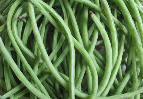 lobiya vegetable