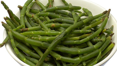 samphire vegetable